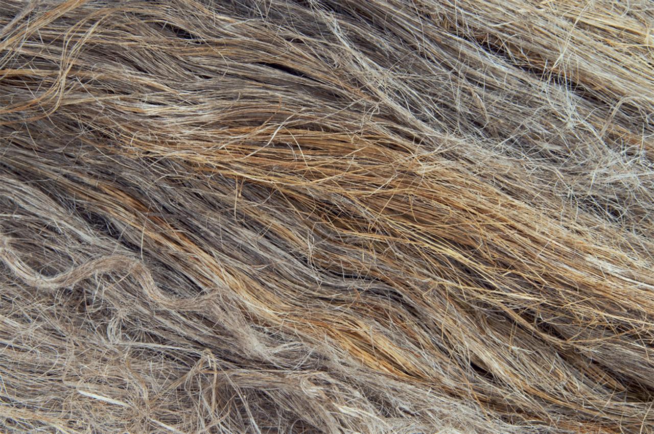 flax_fiber