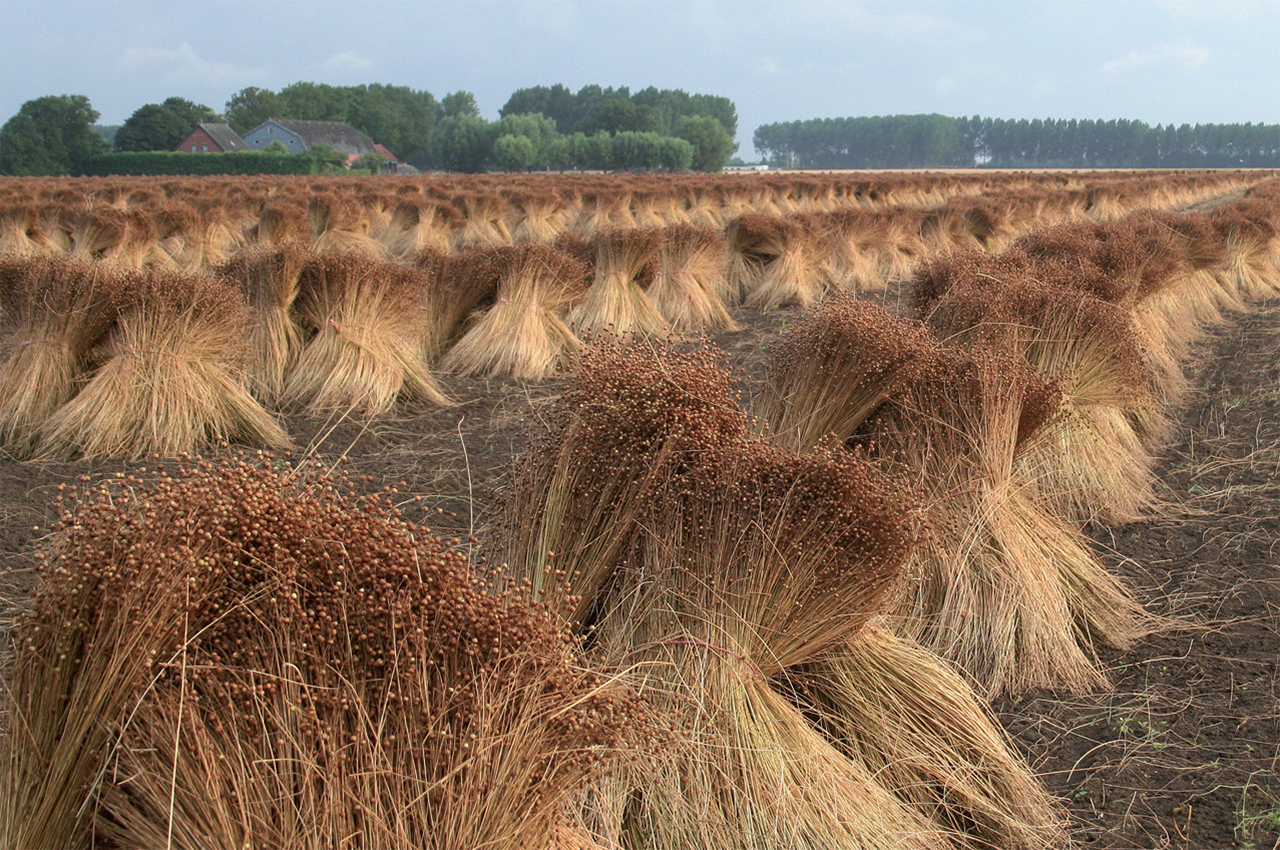 flax_lin